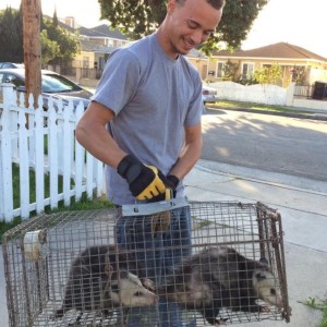 Opossum Trapping By Trapper Key Ray