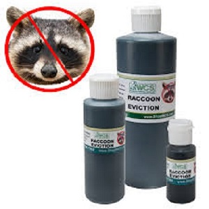 Getting Rid of Raccoons with Eviction Liquid