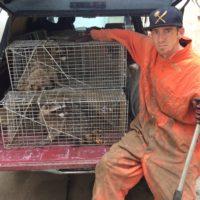 Professional Raccoon Trapper